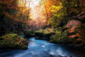 fall river leaves water nature moss czech republic forest sunlight landscape colorful trees blue sunset
