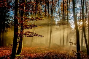 fall sun rays morning landscape trees leaves nature sunlight forest mist