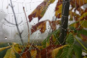fall trees depth of field nature leaves morning spider spiderwebs water drops
