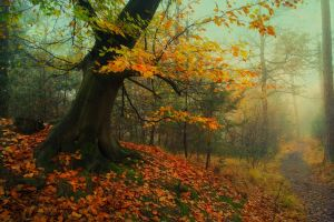 fall trees mist grass moss roots landscape leaves path forest nature morning
