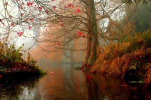 fall water trees lake