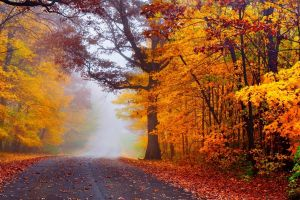 fallen leaves mist trees road nature fall