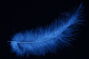 feathers blue simple background