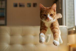 feline cats jumping animals nature