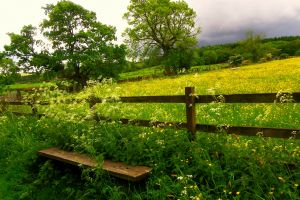 fence bench trees landscape