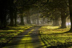 fence green nature morning sun rays landscape trees road sunlight mist leaves grass moss