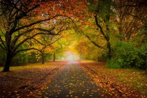 fence nature mist leaves colorful road landscape morning tunnel shrubs trees fall