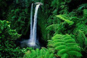 ferns nature landscape waterfall