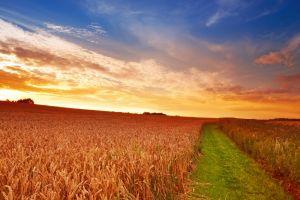 field agro (plants) plants sunlight landscape