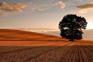 field hills trees landscape
