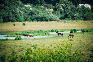 field horse landscape animals