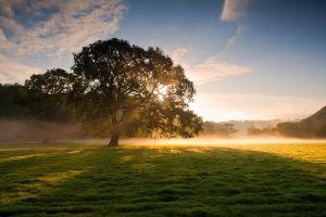 field landscape mist trees morning