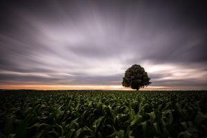 field nature trees motion blur landscape overcast