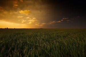 field oklahoma landscape