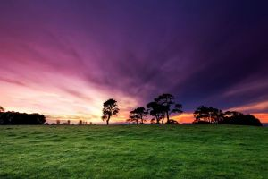 field purple sky nature landscape
