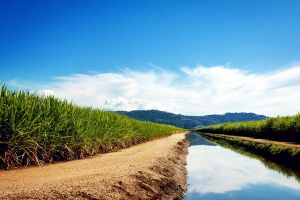 field reflection sky plants clouds canal water nature grass landscape