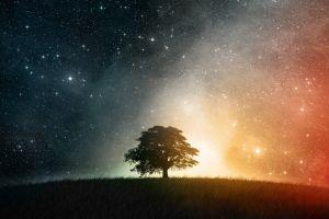 field trees stars