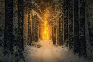 finland forest landscape winter morning trees sunlight snow nature path