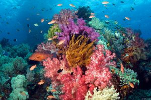 fish nature animals anime anime anime landscape sea anime coral
