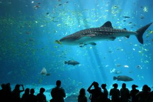 fish whale shark sea shark aquarium animals wildlife nature