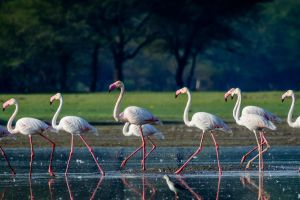 flamingos animals photography birds