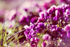 flowers closeup grass bokeh