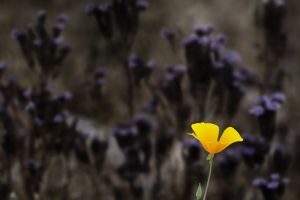 flowers depth of field yellow flowers