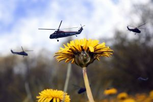 flowers helicopters nature macro depth of field