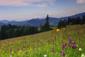 flowers landscape mountains nature field