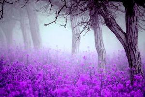 flowers mist trees nature