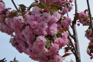 flowers pink flowers plants