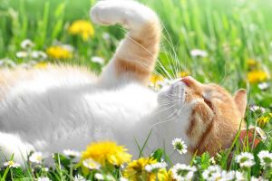 flowers plants animals cats outdoors