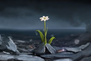 flowers plants artwork white flowers