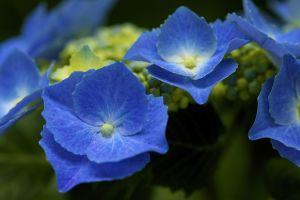 flowers plants blue flowers