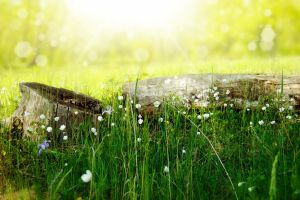 flowers plants grass