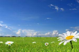 flowers plants landscape white flowers