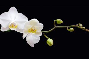 flowers plants macro orchids