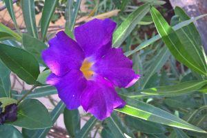 flowers plants purple flowers