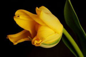flowers plants yellow flowers