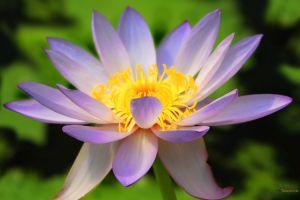 flowers purple flowers plants