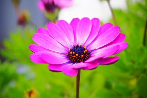 flowers purple flowers purple plants