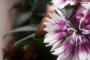 flowers white flowers plants