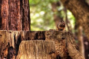forest animals wood trees nature depth of field squirrel