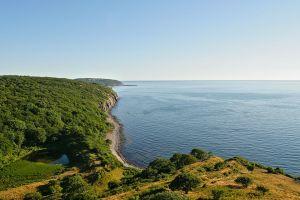 forest coast nature sea denmark