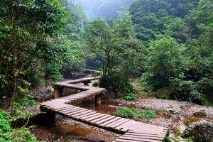 forest creeks pond jungle bridge
