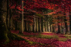 forest fall landscape grass moss red nature roots leaves trees