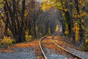 forest fall nature railway