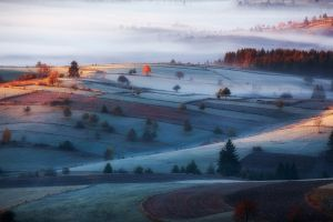 forest field frost morning nature landscape cold mist