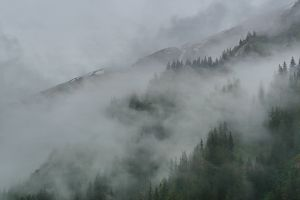 forest forest tracy arm mist clouds alaska