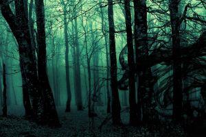 forest gloomy trees photo manipulation nature landscape green dark mist